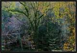 La Forêt du Roi Morvan.