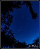 Spruce tree frames constellation Orion