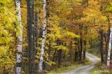 Manor Road autumn