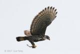 Eagle, Blyth's Hawk @ Hwy 218
