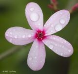 Pink Flower @ SBG
