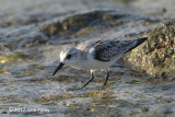 Sanderling @ Marina East Drive
