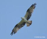 Osprey @ NTL2