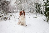 I like snow, I like snow, I like snow. . . . . .