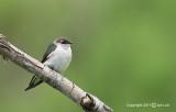 Birds from U-Z
