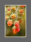 Floral 70