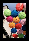 Umbrella street 12