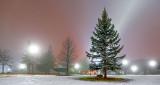 Pine On A Foggy Night P1180377