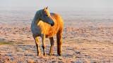 Equine Pal Posing At Sunrise DSCN05328