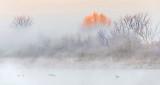 Sunlit Tree Rising Above Ground Fog DSCN05477