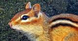 Chippie Up Close DSCN05620