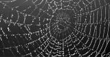 Dewy Spider Web DSCN06452