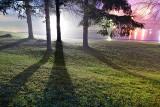 Pine Shadows P1190539