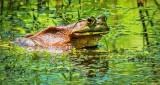 Bullfrog DSCN09708-9