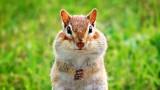 Chubby Cheeks Chippie DSCN10222
