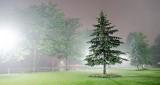 Pine In Night Fog P1210705