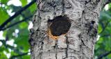 Empty Nest DSCN11001