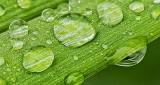 Wet Leaf DSCN11084-5 (crop)
