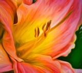 Pink Daylily Stamen DSCN12984 'Art'