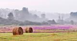Bales & Ground Fog P1220811