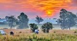 Clouded Sunrise P1230674-80