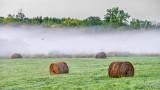 Bales & Ground Fog At Dawn P1230907-9