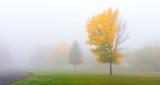 Foggy Fall Colors DSCN15917