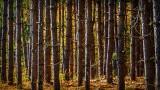 Autumn Color Beyond Pines DSCN15977