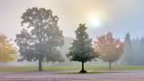 Trees In Autumn Fog DSCN15939-41