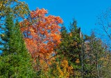 Autumnscape DSCN16413