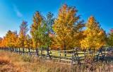 Autumnscape DSCN16380