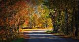 Autumn Back Road DSCN15955