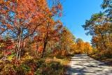 Autumn Cross Road DSCN16783
