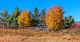 Two Autumn Trees DSCN16802