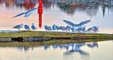 Dock Full o'Gulls DSCN17182