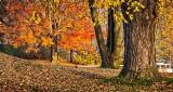 Autumnscape DSCN17235-7