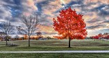 Backlit Autumn Tree Beside Soccer Field DSCN16962-7