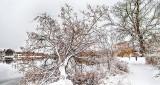 Snowy Morning Walk DSCN17553-5