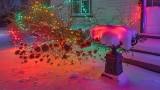 Holiday Lights P1280596-00