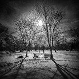 Stewart Park In Winter DSCN18737-9 B&W
