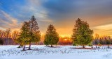 Pines At Sunrise DSCN18821-3
