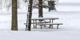 Pines & Picnic Table In Snow DSCN18743-5