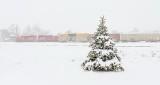 Tree & Train In Snowstorm DSCN19113-4