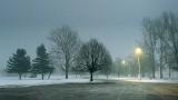 Foggy Park At Dawn P1290503-5