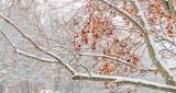 Winter Leaves DSCN19640-2