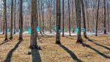 Tapped Trees DSCN19568-70