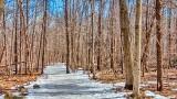 Icy Jack Pine Trail DSCN20750-2