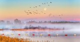 Moon & Geese Over Misty Kilmarnock P1300577-9
