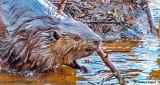 Busy Beaver DSCN22175