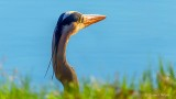 Heron Head DSCN22225